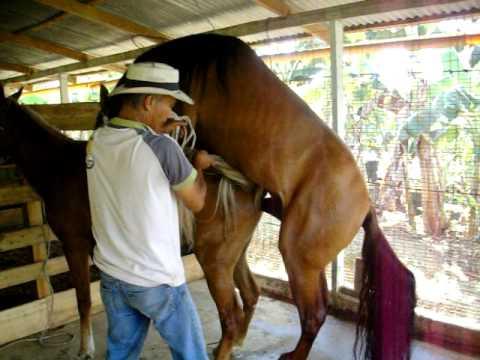 Monta directa caballos