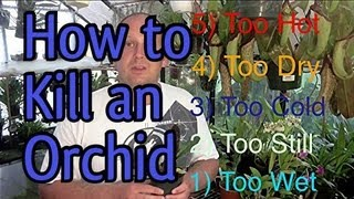 5 Easy Ways To KILL An ORCHID in 5 Minutes : When to Water Orchids and So Much More