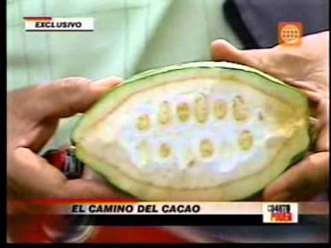 Cacao blanco en Cuarto Poder