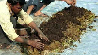 Preparing Vermicompost | केंचुवा खाद बनाने की विधि | Shashwat Yogic kheti