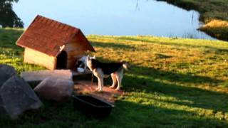 Suņu rīta rosme