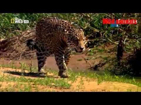 Xxx Mp4 Wild Animals Wild Amazon Cradle Of Life Mysterious Tribe 3gp Sex
