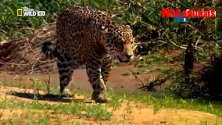 Wild animals - Wild Amazon cradle of life - Mysterious tribe