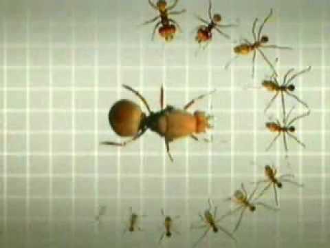 El trabajo de las hormigas