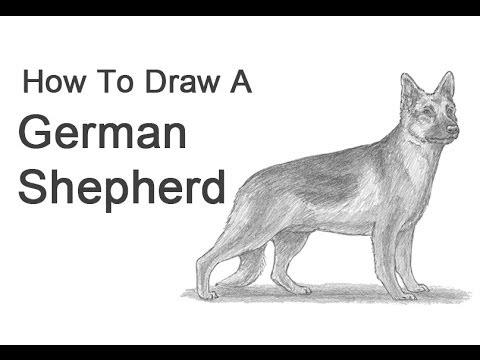 How to Draw a Dog (German Shepherd)
