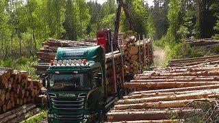 Scania R560 6x4 V8 Timber Truck Loading