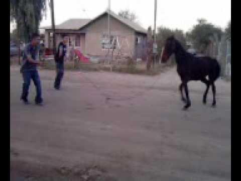 caballo 1 4 de milla