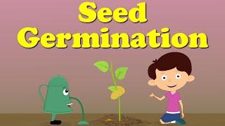 Seed Germination   #aumsum