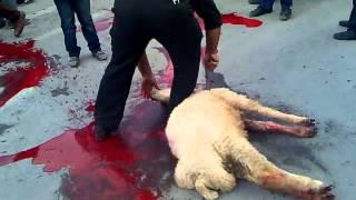 زجر کشیدن حیوان بخاطر عدم مهارت در سر بریدن