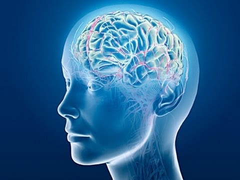 Interesting Facts About The Human Brain