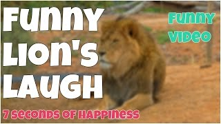 Funny Lion laughing 🔸 7 second of happiness FUNNY Video 😂 # 356