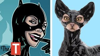 15 Superheroes In Real Life As Cats