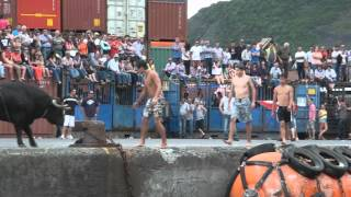 Tourada à corda cais de Velas (stierenvechten op de kade van Velas, Sao Jorge, Azoren)