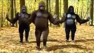 Prem ratan dhan payo gorilla cover
