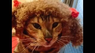 ベンガル猫軍団&ミッキーのなんちゃってプードル