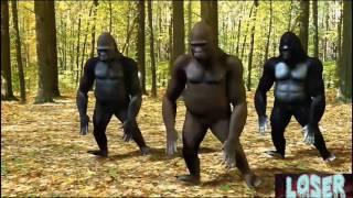 Chal Kariba Thia Pala...Funny Gorilla Dance