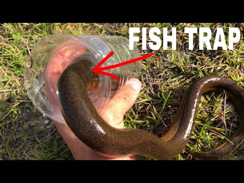 Xxx Mp4 Eel CAUGHT IN WATER BOTTLE FISH TRAP 3gp Sex