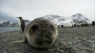 Friendliest seals ever?   Antarctica Ep2