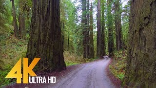 4K Forest Scenic Drive - Howland Hill Road, Jedediah Smith Redwoods, CA - New Version