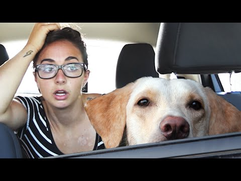 Xxx Mp4 How Long Can You Leave Your Dog In The Car 3gp Sex