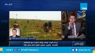 """وكيل لجنة الزراعة بمجلس النواب: وزارة الزراعة تحركت سريعًا في واقعة """"بذور الطماطم الفاسدة"""