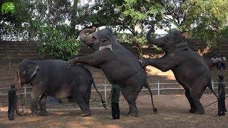 Elephant Dances and Mini Circus at Dehiwela Zoo