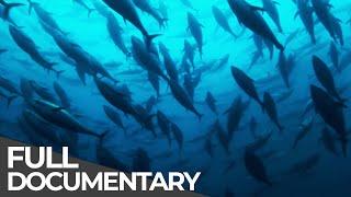 ►Track of the Tuna (FULL DOCUMENTARY)