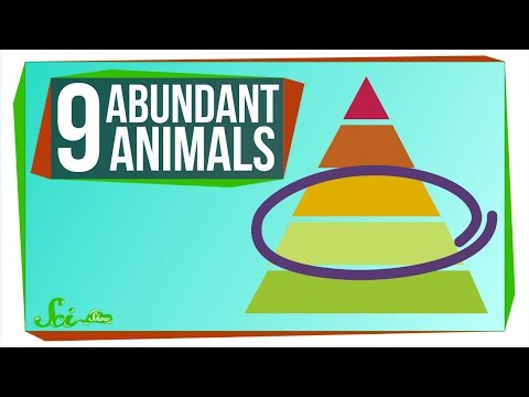 9 of the Most Abundant Animals on Earth