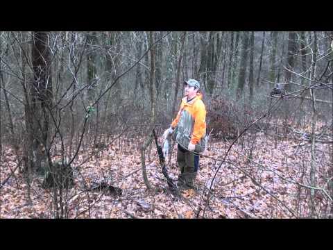 Great day Rabbit hunt 15 rabbits