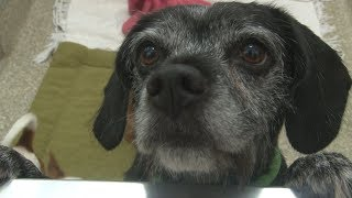 Florence Pets:  Local shelter helps with the relocation of pets in the path of Florence.