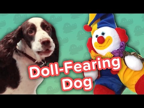 Doll Fearing Dog & Boogie Boarding Frenchies Funny Animal Compilation