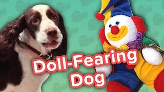 Doll-Fearing Dog & Boogie-Boarding Frenchies! // Funny Animal Compilation
