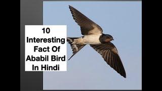 10 Interesting Fact Of Ababil Bird In Hindi
