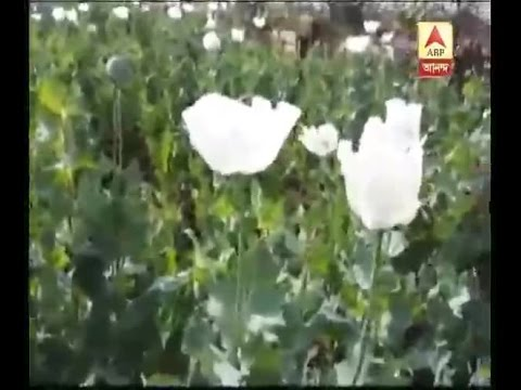 Xxx Mp4 Again Police Attack At Kaliachak Maldah For Destroying Illegal Land Of Opium 3gp Sex