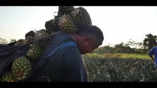 Chula Brand Pineapple