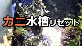 カニ水槽リセットpart2 【滝のあるテラリウム】