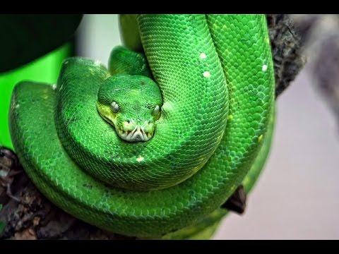 Deadliest Animals Amazon Documentary