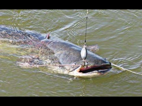 ловля сома на донку видео с берега весной видео