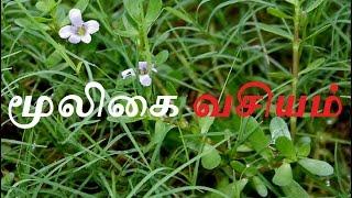 மூலிகை வசியம்