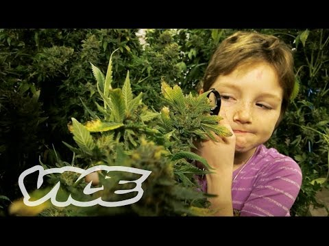 Xxx Mp4 Marijuana Minors 3gp Sex