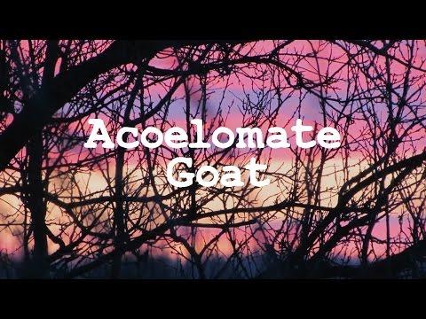 Xxx Mp4 Acoelomate Goat Demo 3gp Sex