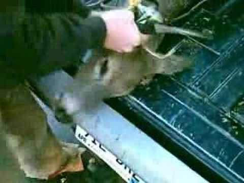 deer head gets chopped off for cwd testing