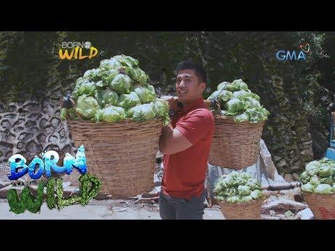 Xxx Mp4 Born To Be Wild Meet The Comboys Of Benguet 3gp Sex