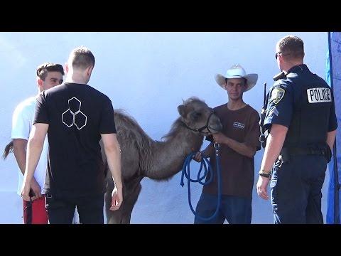 Camel Toe Prank FAILS & EXTRAS