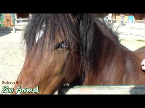 Beautiful Horse with blue eyes - Farm Animal video for kids