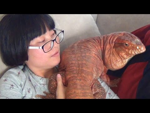 Xxx Mp4 Living With A Giant Dog Lizard 3gp Sex