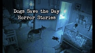 4 Scary Stories Where Dogs Saved the Day