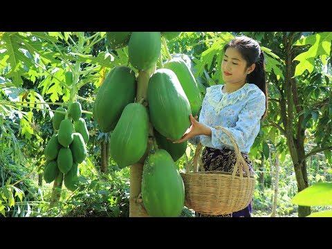 Big & Sweet Ripe Papaya Easy & Simple Papaya Recipe Prepare by countryside life TV.