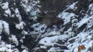 Kill Shots of Markhor & Ibex Hunts By Pakistan Guides.mp4