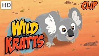 Wild Kratts - Exotic Wild Animals